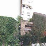Délierrage, dégagement de toit et façade : avant-après - Paris