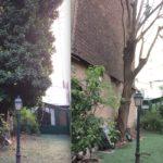 Délierrage arbre et mur : avant-après