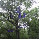 Bivouac dans les arbres - Île-de-France