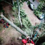 Élagage, abattage d'arbres Paris
