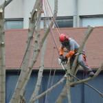 Élagage, taille, abattage d'arbres Hauts-de-Seine