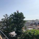élagage taille arbre sur toit-terrasse