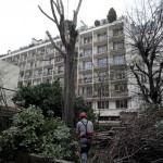 Élagage, abattage d'arbres Paris 14