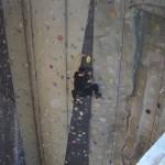 Escalade mur Paris