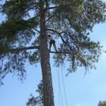 Grimpe d'arbres, accrobranche - forêts région parisienne