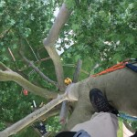 Grimpe d'arbres, accrobranche - forêts Paris