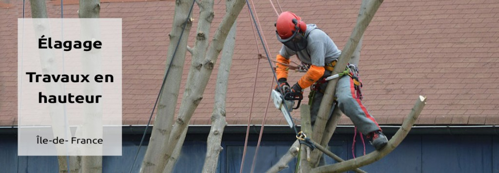 Élagage, taille, abattage d'arbres