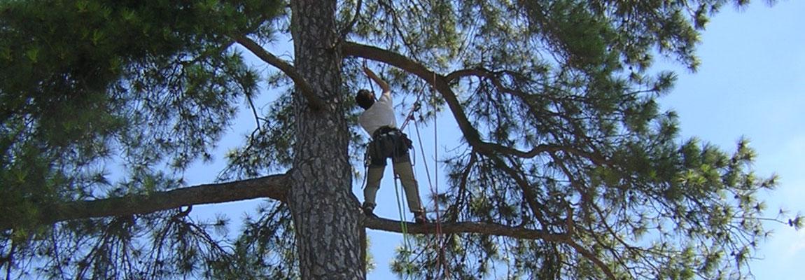 grimpe d'arbres Paris île-de-France